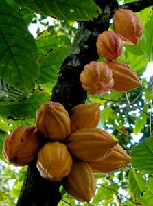 kakaofa